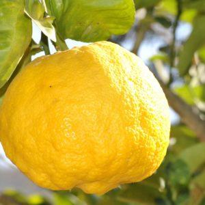 lemon 181650 1920 300x300 - Donna Cristina