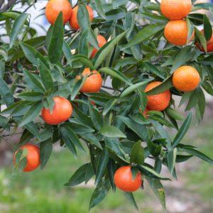 fruit 4760219 1920 300x300 - Donna Cristina