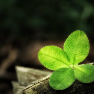 four leaf clover 1624217 1920 300x300 - Donna Cristina