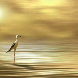 oro liquido 300x300 - Donna Cristina